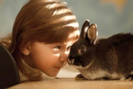 What are the benefits of having a bunny?