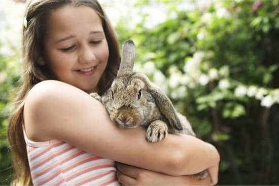 pros and cons of having a bunny as a pet