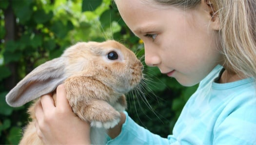 why rabbits are the best pets
