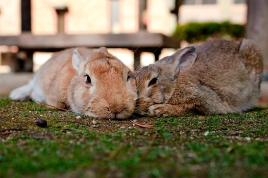can different breeds of rabbit live together?