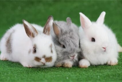 can you keep more than two rabbits together?