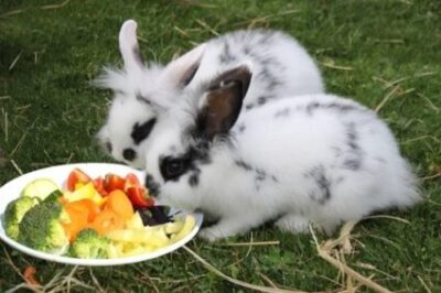 can you overfeed a rabbit?