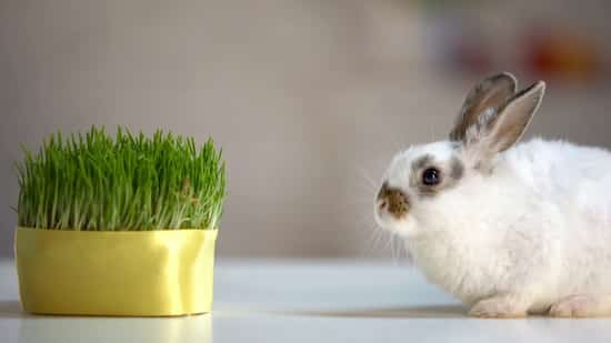 do rabbits lose weight in the summer?