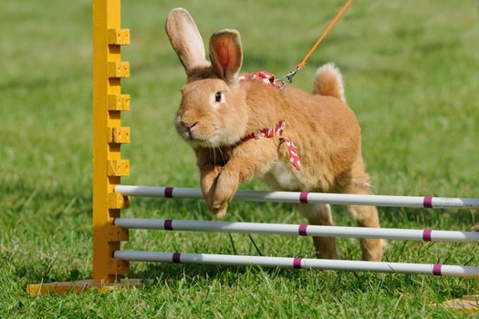 exercise requirements for rabbits