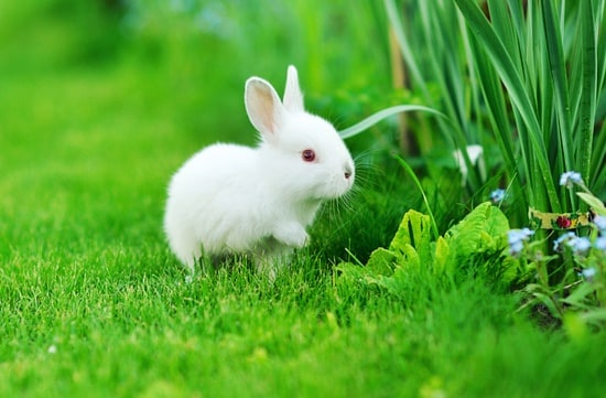 how to keep baby rabbits healthy