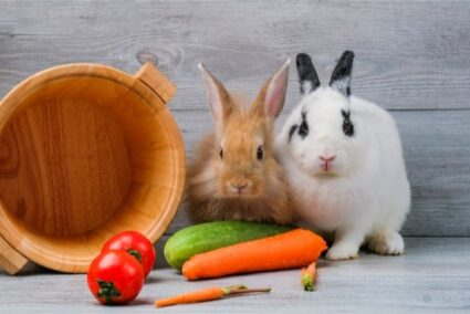 is cucumber good for rabbits?