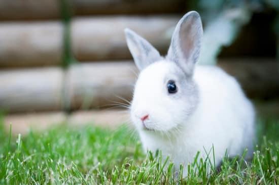 rabbits fur is turning grey