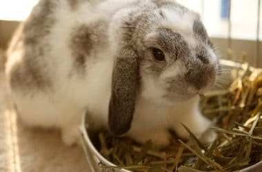 what does it mean when rabbits twitch their noses?