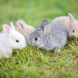 when will baby bunnies get fur?