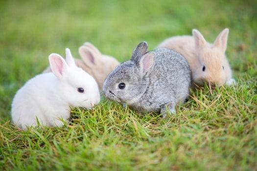 when will baby bunnies get fur?