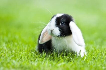 why do rabbits twitch their noses?