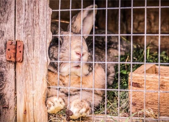 why is my rabbit depressed?