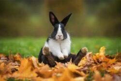 When Do Dutch Rabbits Stop Growing?