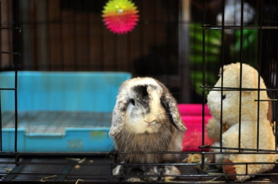 What Age Do Rabbits Stop Growing? — Rabbit Care Tips