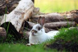 When Do New Zealand Rabbits Stop Growing?