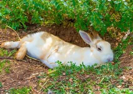 do rabbits sleep at night?