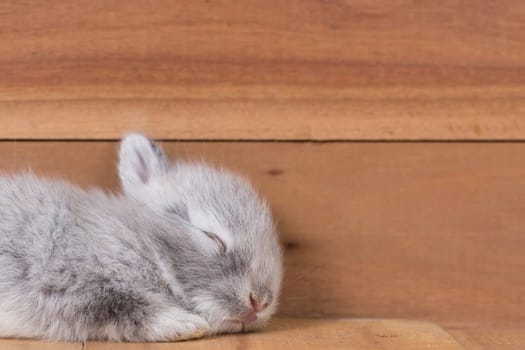 do rabbits sleep with their eyes open or closed?