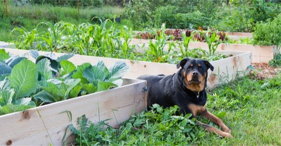 how to keep dogs away from rabbit hutch