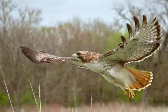 how to protect rabbits from hawks