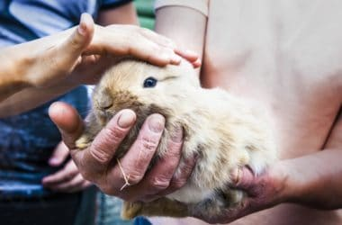 what age can you start handling baby rabbits?
