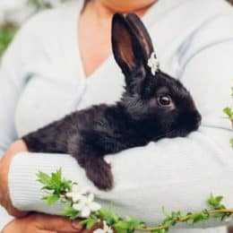 when do rabbits stop growing?