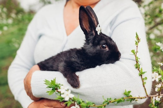 What Age Do Rabbits Stop Growing Rabbit Care Tips