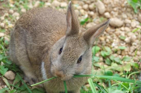 why do rabbits bite humans?