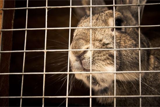 Are rabbits cannibals?