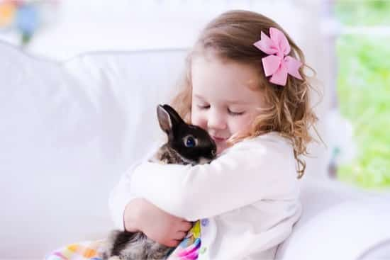 Best Rabbit for Kids