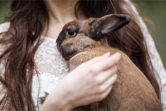 Can Rabbits Sense Illness in Humans?