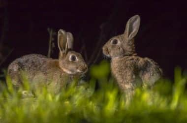 Do Rabbits Get Scared of the Dark?