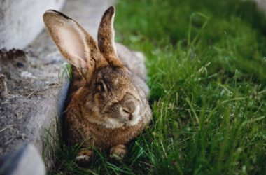 Is Eating Paper Bad for Rabbits?