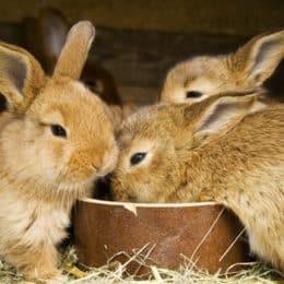 baby rabbit food list
