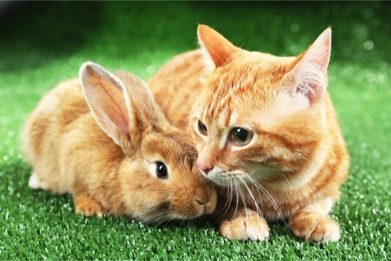 can cats and rabbits live in the same house?