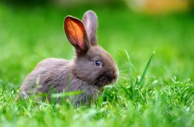 can pet rabbits live in the wild?