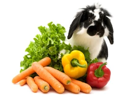 can rabbits eat green and red peppers