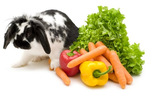 can rabbits eat jalapeno peppers?