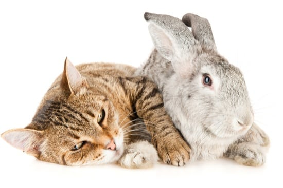 do cats and rabbits get along as pets?