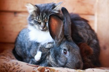 do cats get on with house rabbits?
