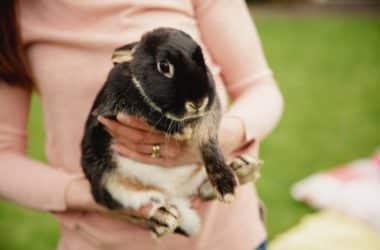 friendly rabbit breeds