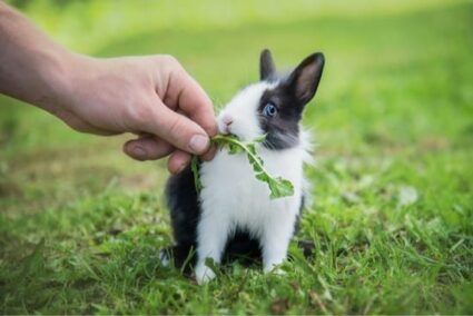 healthy food for baby rabbits