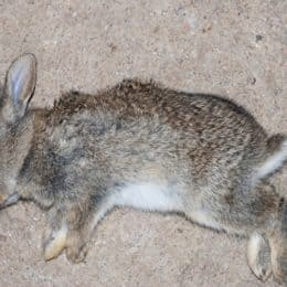 how do you dispose of a dead pet rabbit