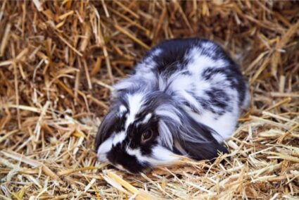 how long does rabbit bedding last?
