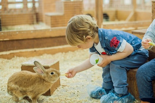 is a rabbit a good pet for a child?