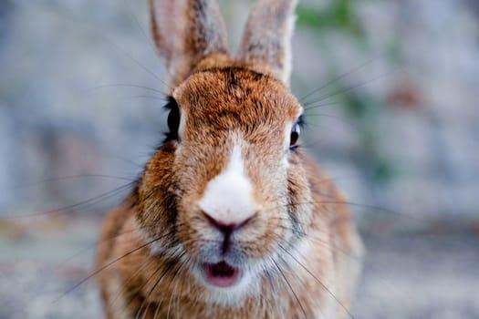 jealousy in rabbits
