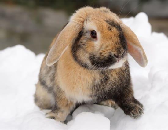 keeping rabbits warm in winter outside