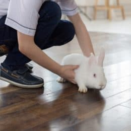 my rabbit won't let me pick it up anymore