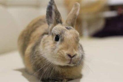 rabbit gazing at me