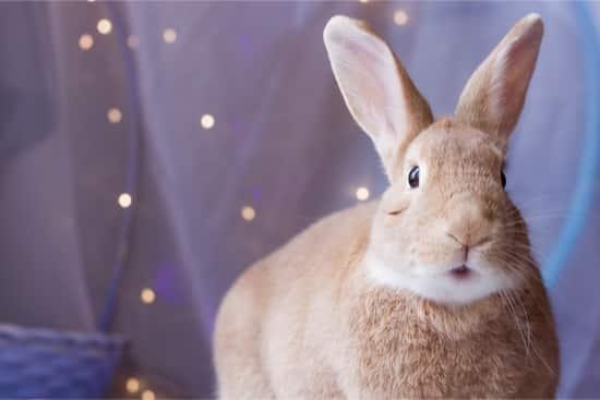 rabbit has recurrent hiccups