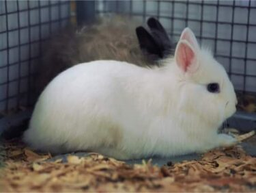 rabbit hiccups treatment